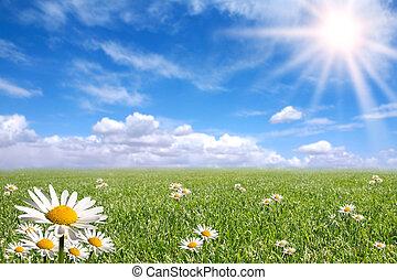 일, 외부, 밝은, 행복하다, 봄