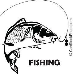 잉어, 미끼, fish