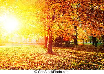 잎, 가을의, 나무, 가을, fall., park.