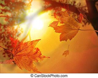 잎, 가을, 가을