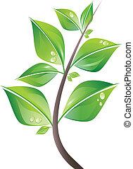 잎, 가지
