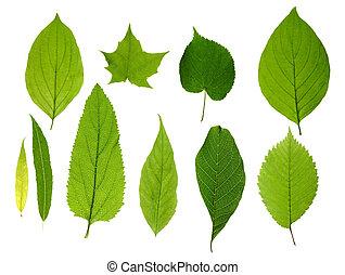 잎, 녹색, 고립된