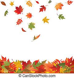 잎, 눈이 듯한, 가을