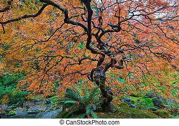 잎, 레이스, 나무, 일본어, 가을, 단풍나무, 정원