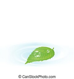 잎, 물, 위의, 녹색, 단일