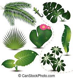 잎, 수집, 열대적인