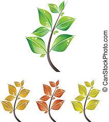 잎, 은 분기한다