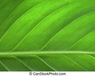 잎, 클로우즈업, 녹색