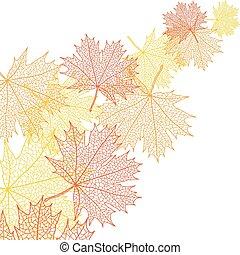 잎, bacground, 모듬 명령, 가을, 벡터, maple.