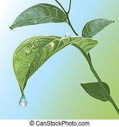 잎, waterdrops