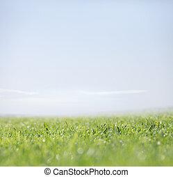 자연, 맑은 하늘, 녹색의 배경, 풀
