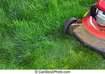 잔디, 절단, 녹색, grass., 잔디 깎는 사람
