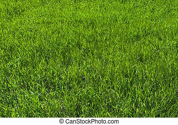 잔디 풀, 녹색, 직물
