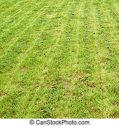 잔디 풀, 신선하의, 매니큐어를 칠하게 된다