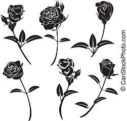 장미, 꽃