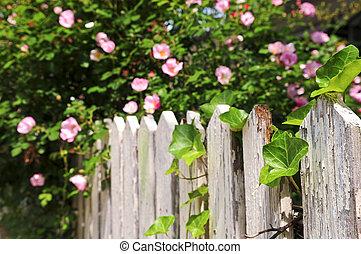 장미, 정원, 고매하다