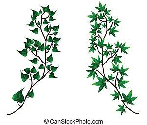 장식적이다, 실루엣, 가지, -, 잎, 벡터, 녹색의 배경, 백색