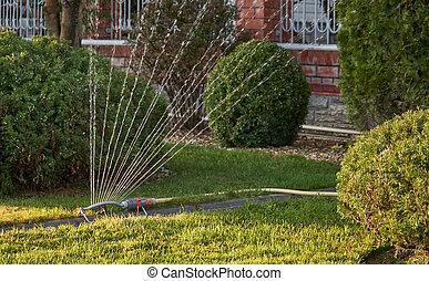 정원, 해수욕장의, 가정, 잔디, sprayer