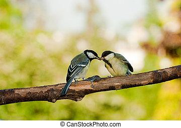 젖꼭지, 멋진, 먹이는 새