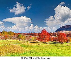 조경술을 써서 녹화하다, 다채로운, 가을, 산
