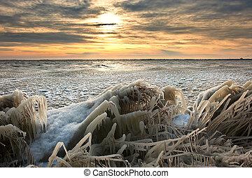 조경술을 써서 녹화하다, 추위, 얼음, 갈대, 해돋이, 겨울, 덮는