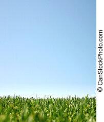 청록색, grass:happyland, 하늘