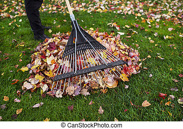 청소를 하는 것, 동안에, 야드, 가을