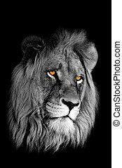 초상, 사자, african