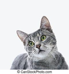 초상, 줄무늬가 있는, cat., 회색