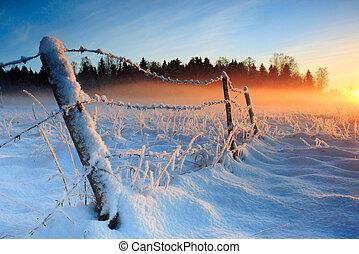 추위, 동정하다, 일몰, 겨울