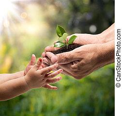 취득, 손, 아이, 식물