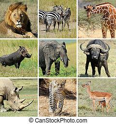 콜라주, 동물, african