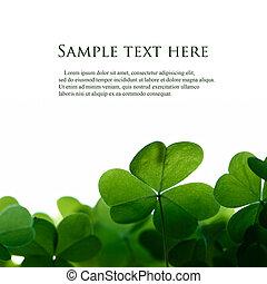 클로버, 공간, text., 녹색, 은 잎이 난다, 경계