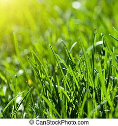 태양, 풀, 녹색의 배경, 광선