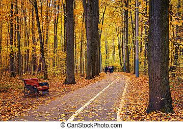 통로, 가을, 공원