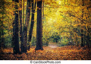 통로, 공원, 가을