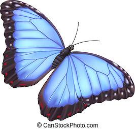 파랑, 나비, morpho
