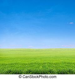 파랑, 위의, 하늘 분야, 녹색 잔디