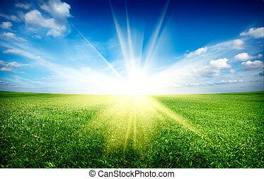 파랑, 태양, 하늘, 녹색 분야, 일몰, 억압되어, 신선한, 풀