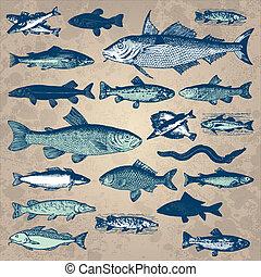 포도 수확, fish, 세트, (vector)
