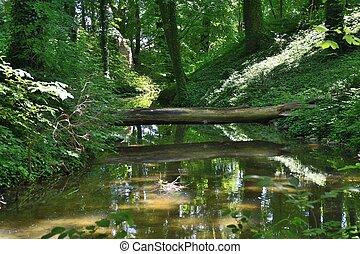 폴란드, 녹색, 공원