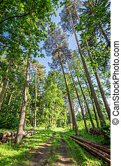 폴란드, 녹색, 놀랄 만한, 여름, 숲