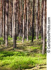 폴란드, 숲