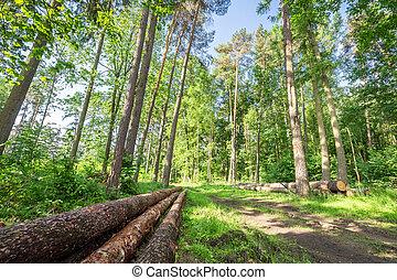 폴란드, 이상한, 녹색의 숲, 여름