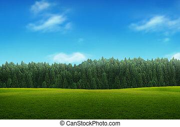 푸른 하늘, 나이 적은 편의, 조경술을 써서 녹화하다, 녹색의 숲