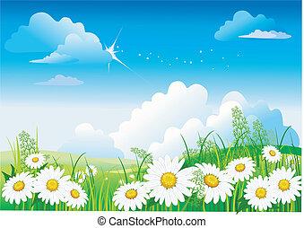 푸른 하늘, chamomile
