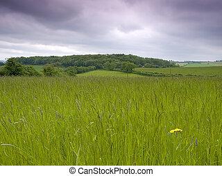 풀이 무성한, 목초지