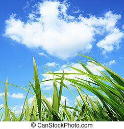 풀, 발달, 환경, 녹색, 보호, 개념
