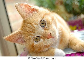 호기심이 강한, 빨간 새끼고양이