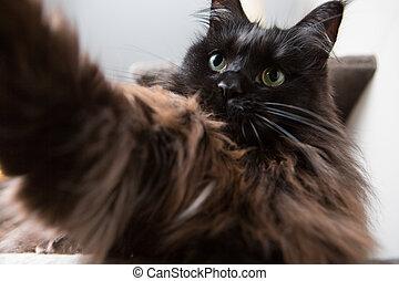 혼자서 젓는 길쭉한 보트, selfie, 충분한, 미국 너구리, 고양이